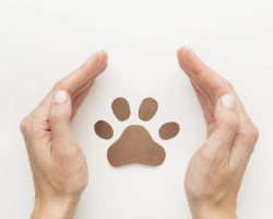 top-view-hands-protecting-paw-print-animal-day